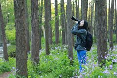 Portrait of a Asian Chinese nature woman photographer carry her camera screen in a spring park forest Royalty Free Stock Photos