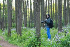 Portrait of a Asian Chinese nature woman photographer look at her camera screen in a spring park forest , with good hand gesture stock photography