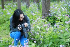 Portrait of a Asian Chinese nature woman photographer look at her camera screen in a spring park forest surround by flowers Royalty Free Stock Image