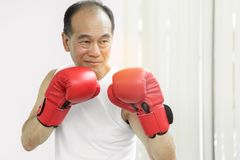 Portrait of Asian senior fighter man with red boxing gloves on w. Hite background Stock Images