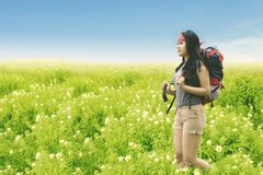 Asian woman carrying backpack in the flower field stock images