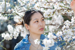 Portrait of Asian young woman among blossoming almond branches Stock Photography