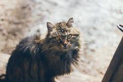 Portrait atmosphérique d'un vieux chat Images libres de droits
