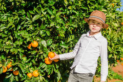 Portrait of attractive cute young boy picking Stock Image