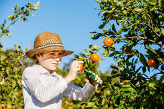 Portrait of attractive cute young boy picking Royalty Free Stock Photo