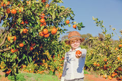 Portrait of attractive cute young boy picking Royalty Free Stock Photography