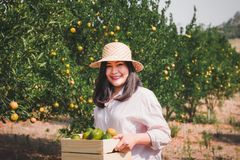 Portrait of Attractive Farmer Woman is Harvesting Orange With Her Basket in Organic Farm, Cheerful Girl in Happiness Emotion While stock image