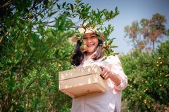 Portrait of Attractive Farmer Woman is Harvesting Orange With Her Basket in Organic Farm, Cheerful Girl in Happiness Emotion While royalty free stock photos