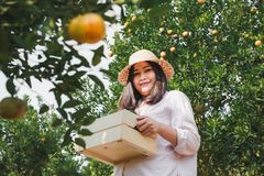 Portrait of Attractive Farmer Woman is Harvesting Orange in Organic Farm, Cheerful Girl in Happiness Emotion While Reaping Oranges royalty free stock images