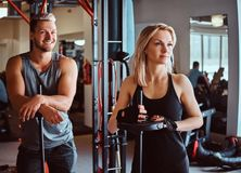 Portrait of an attractive sportive couple posing while leaning on barbells, looking away in a fitness club or gym. Portrait of an attractive sportive couple stock image