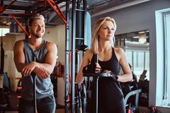 Portrait of an attractive sportive couple posing while leaning on barbells, looking away in a fitness club or gym. Portrait of an attractive sportive couple royalty free stock photo