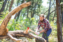 Portrait of an attractive young lumberjack. Who chopping wood with an ax Stock Photography