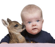 Portrait of baby boy with Fallow Deer Fawn. In front of white background, studio shot Stock Images