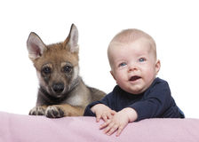 Portrait of baby boy with Young European wolf Royalty Free Stock Image