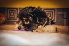 portrait  baby  dog  sad  love royalty free stock photos