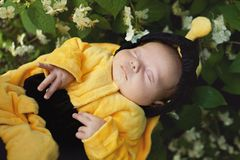 Portrait of baby dressed as bee Royalty Free Stock Image