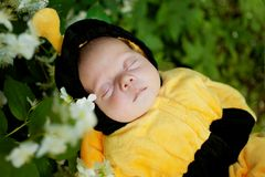 Portrait of baby dressed as bee Royalty Free Stock Photos