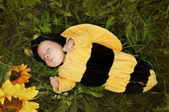 Portrait of baby dressed as bee Stock Images