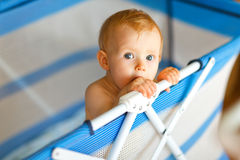 Portrait of baby in playpen Royalty Free Stock Images