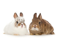 Portrait of baby rabbits Royalty Free Stock Images