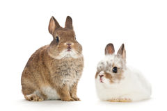Portrait of baby rabbits Stock Image