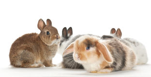 Portrait of baby rabbits Stock Photos