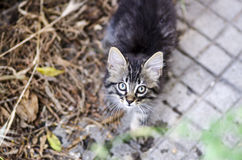 Portrait of a baby tabby cat looking up outdoor Royalty Free Stock Photos