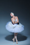 Portrait of the ballerina in ballet tatu on blue background Royalty Free Stock Photography