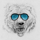 Portrait of bear drawn by hand in pencil in sunglasses Royalty Free Stock Images