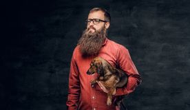 Portrait of bearded male in a red shirt holds a brown badger dog.  Royalty Free Stock Photography