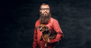 Portrait of bearded male in a red shirt holds a brown badger dog.  Stock Photo