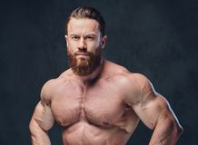 Portrait of bearded shirtless bodybuilder. Royalty Free Stock Photos