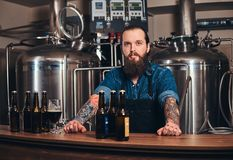 Portrait of a bearded tattooed hipster male in a jeans shirt and apron working in a brewery factory, standing behind a. Portrait of a bearded tattooed hipster Royalty Free Stock Photography