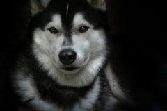 Beautifull dog. Portrait a beautiful animal stock photography