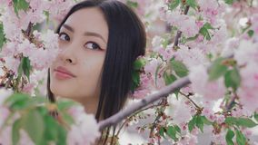 Portrait of a beautiful asian girl outdoors against spring blossom tree. stock footage