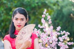 Free Portrait Beautiful Asian Girl Wearing Cheongsam Red Dress Hold Fan Royalty Free Stock Image - 170362936