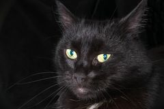 Portrait of a beautiful black cat Stock Photo