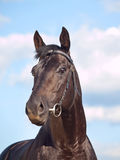 Portrait of beautiful black horse at blue sky