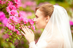 Portrait of beautiful bride smelling pink flowers Royalty Free Stock Images