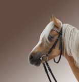 Portrait of a beautiful brown horse. The portrait of a beautiful brown horse stock photo