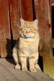 Portrait of a beautiful cat. Cat sitting on a street in the rays of the rising sun Royalty Free Stock Images