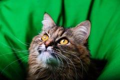 Portrait of beautiful cat stock photos