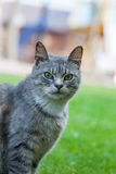 Portrait of a beautiful cat against a green grass Royalty Free Stock Image