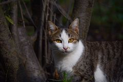 Portrait of a beautiful cat in a garden, twilight Royalty Free Stock Images