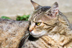 Portrait of beautiful cat looking away Stock Images