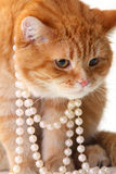 Portrait of beautiful cat in pearl Royalty Free Stock Images
