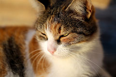 Portrait of a beautiful cat Stock Photography
