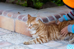 Portrait of a beautiful cat Royalty Free Stock Photography