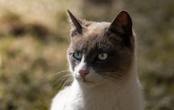 Portrait of a beautiful cat with unfocused background stock photo