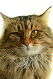 The portrait of a beautiful cat. Stock Image